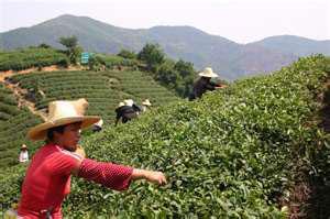 Знаменитый китайский чай